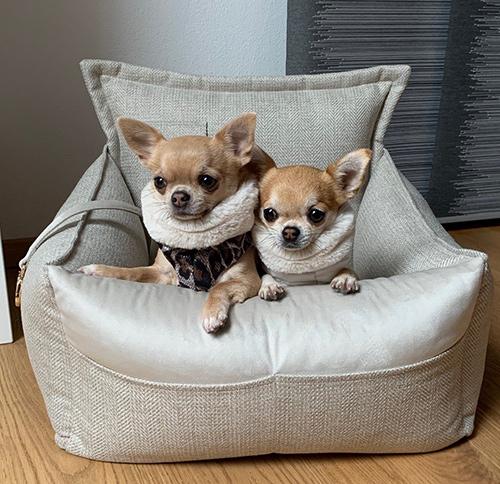Hunde-Autositze
