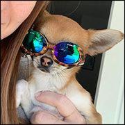 Hunde-Sonnenbrillen