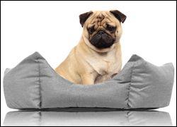 Hunde-Betten