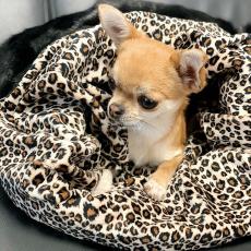 Hunde-Schlafsack Leopard schwarz-braun
