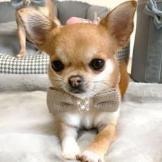 Hunde-Fliege Bow Tie beige-rosa