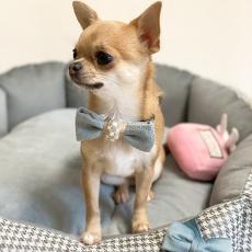 Hundehalsband Bow Tie blau-beige