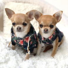 Hunde-Sweater KAHALA BEACH flower