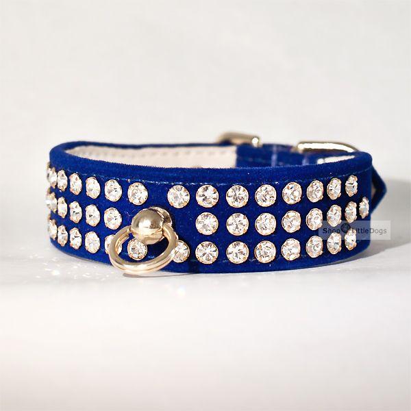 Hundehalsband & Leine 'Royal' saphirblau, im Set