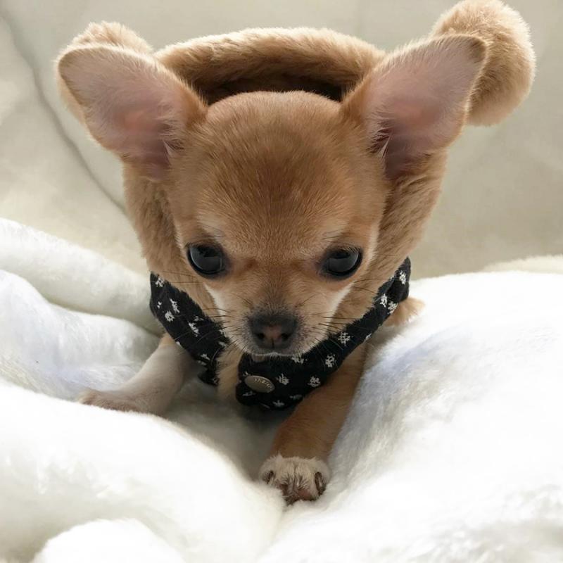 Hundejacke 'My Boo' schwarz-braun