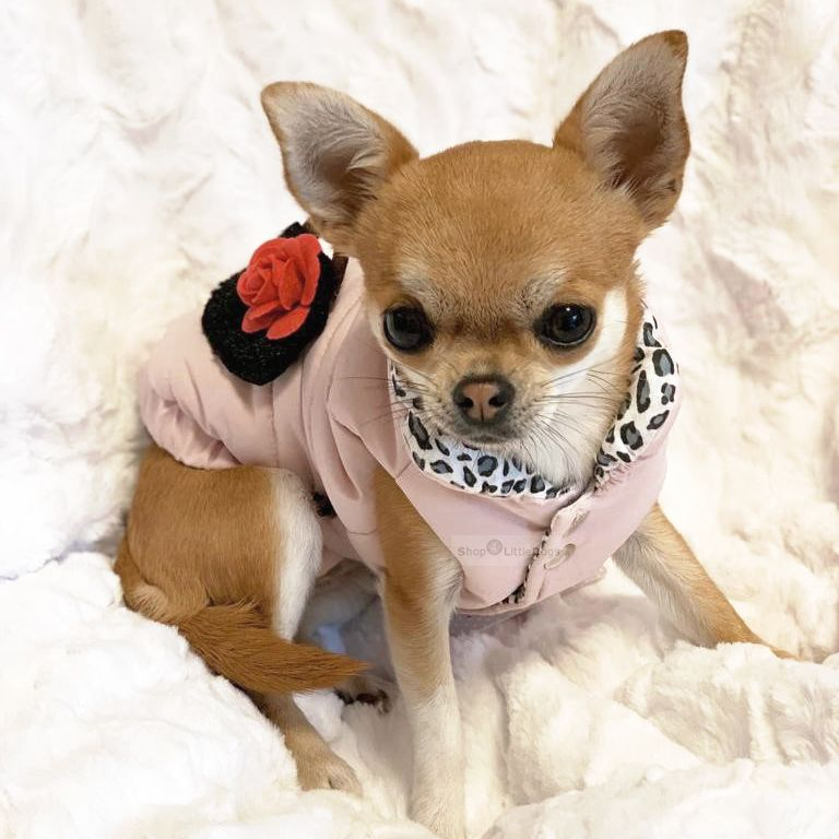 Hundejacke 'Rose Coat' rosé