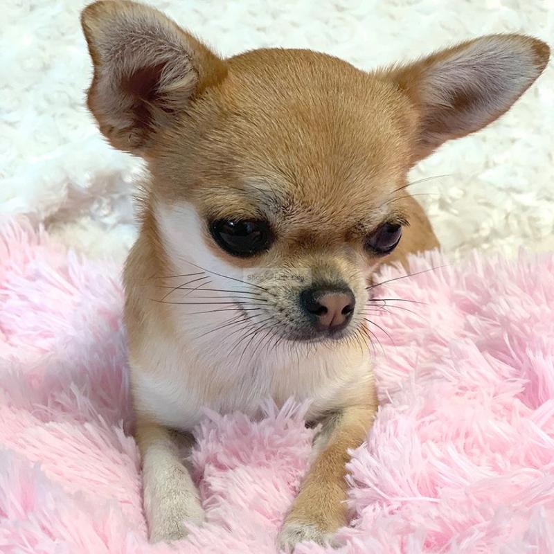 Hundedecke 'Shag' rosé