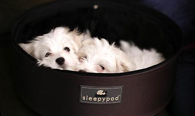 hund unterwegs die innovative hunde und katzen. Black Bedroom Furniture Sets. Home Design Ideas