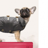 Hunde-Regenmantel 'Zephyr' grau
