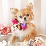 Hundehalstuch Fashionista fuchsia