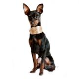 Hunde-Halsband 'Luxury' weiß