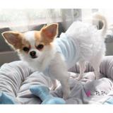 Hundekleid Lace hellblau