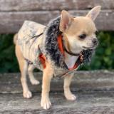 Hunde-Jacke Action beige (Gr.XS)