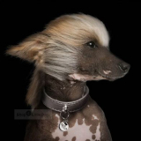 Hundehalsband 'SHINE' titan