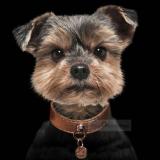 Hundehalsband 'SHINE' cooper