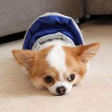 Hundejacke Happy grau-blau