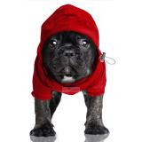 Hunde-Regenjacke 'PREPPY' rot