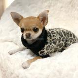 Hundepullover OKAVANGO (Gr.35,40)