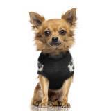 Hundepullover 'OKAVANGO'