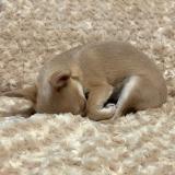 Hundedecke 'Rosebud' sand