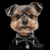 Hunde-Schleife Glitter Bow schwarz