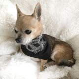 Hunde-Halstuch Crown schwarz