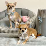 Hunde-Fliege 'Bow Tie' beige-rosa