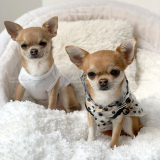 Hunde-Shirt 'PARADISIO' weiß