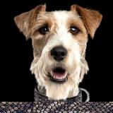 Hundehalsband 'PYTHON' natural