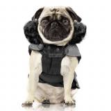 Hundejacke HARLINGTON