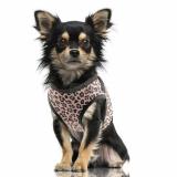 Hunde-Geschirr 'BOTSWANA' rosé