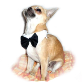 Hunde-Fliege 'Peppino' weiß-schwarz