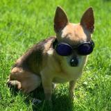 Sonnenbrille 'Shiny Black' schwarz