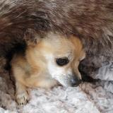 Cuddle Bed Platin silber-braun